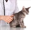 Ветеринарные клиники в Куйтуне